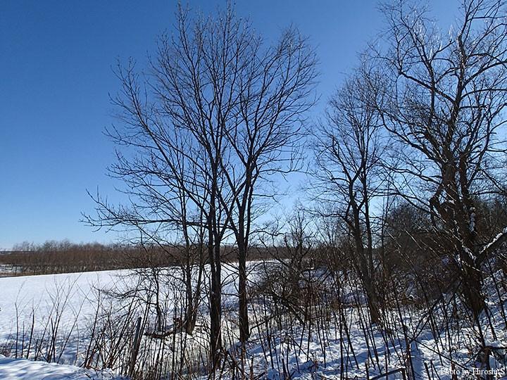 青空と既に落葉した木々。何処にでもある風景だが、そんな景色が好きだ。
