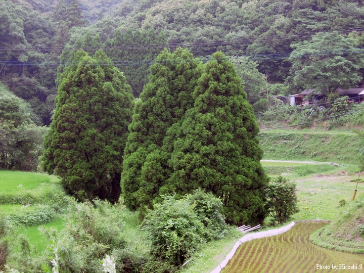 天草 上島の風景