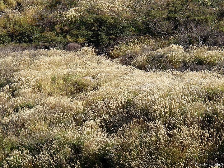 阿蘇山麓はススキが多い。この年は秋に訪れた為、天候には恵まれた。