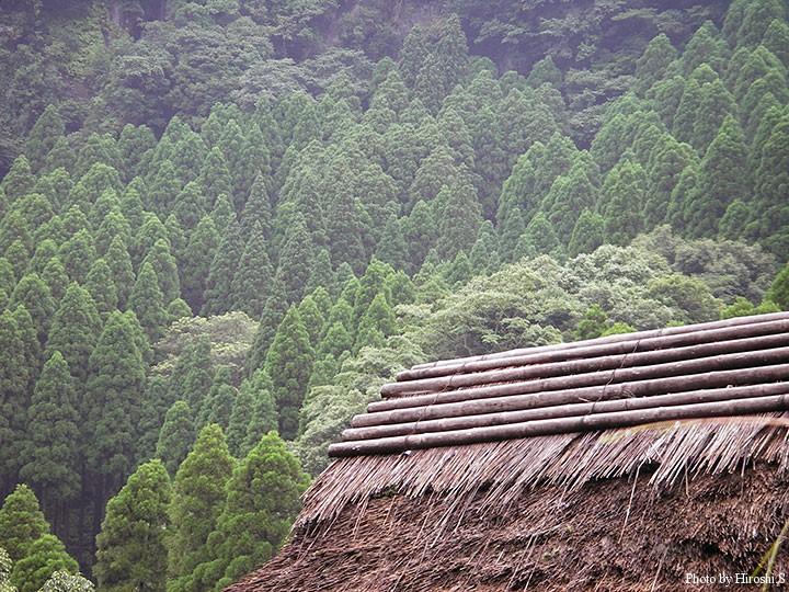 古民家を解体して運び、宿の建物としているらしい。全て藁葺き屋根である。