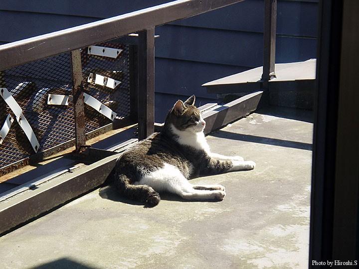 城山展望所にて 当時、自宅に居た猫とそっくり。