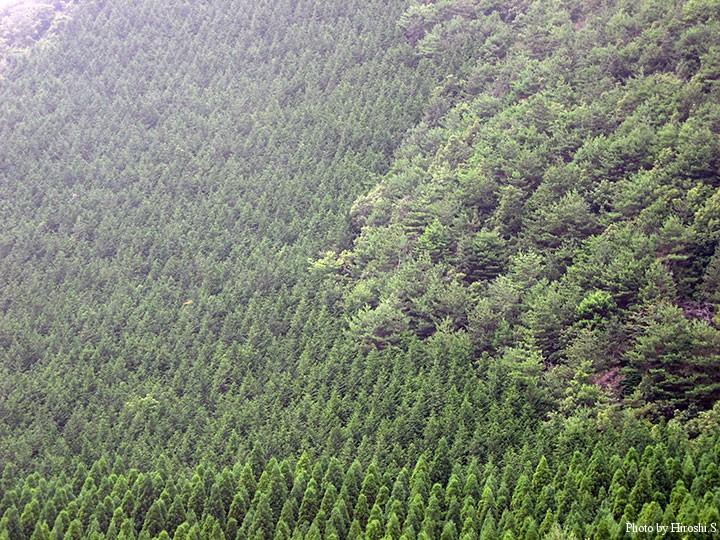 北海道では見ることの出来ない大規模な二次林