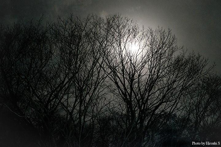夜半過ぎに現地に到着したところ、月明かりに木々のシルエットが。