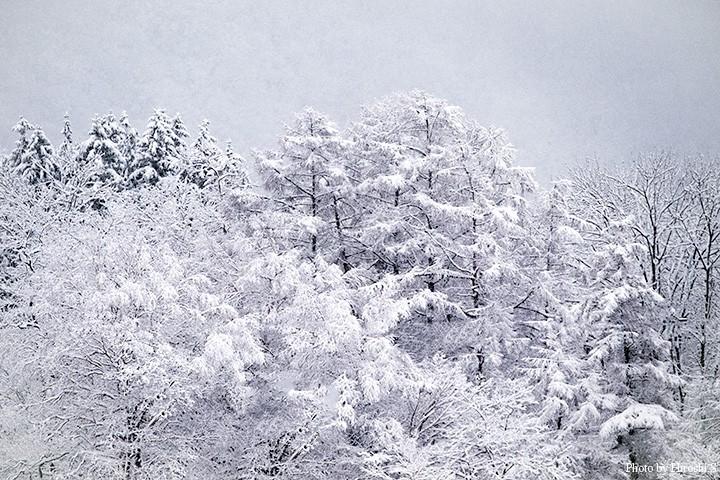 帰還日の今日は、まとまった降雪に見舞われた。