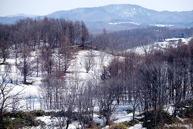 平地近くの山に雪は残るが、もう少し先という感じだろうか