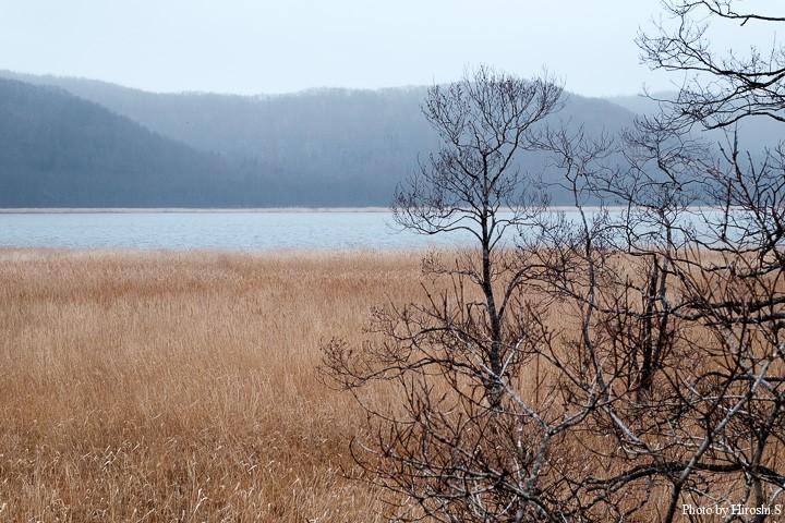 今時期の典型的な湿原の風景