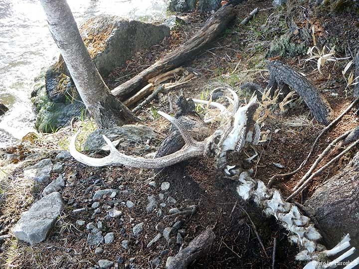 ヤイタイ崎にて 残酷に見えるが、自然界では極当たり前のことだ