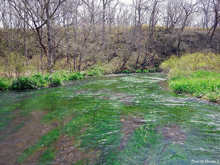梅花藻も復活しつつあり、この流域などは過去より増えたくらいである