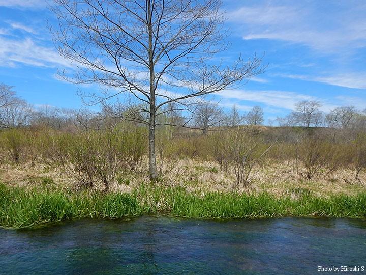 良い天候に恵まれ、青空と梅花藻が心に響く