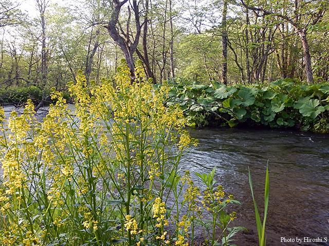 春の西別川