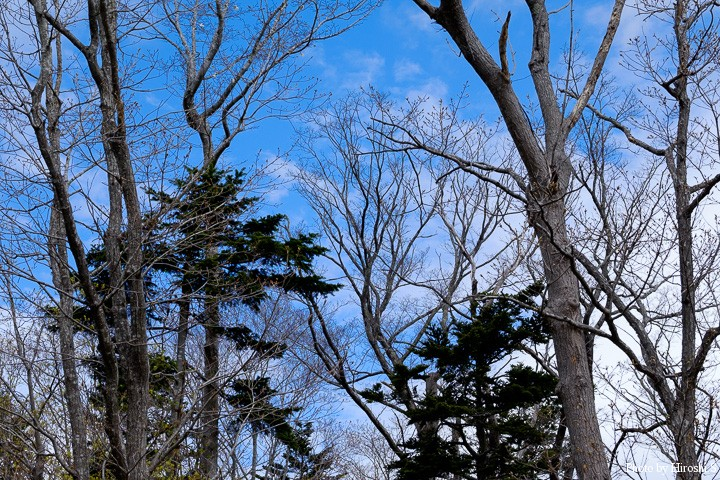 曇りの予報だったが、いっとき青空も見えた。