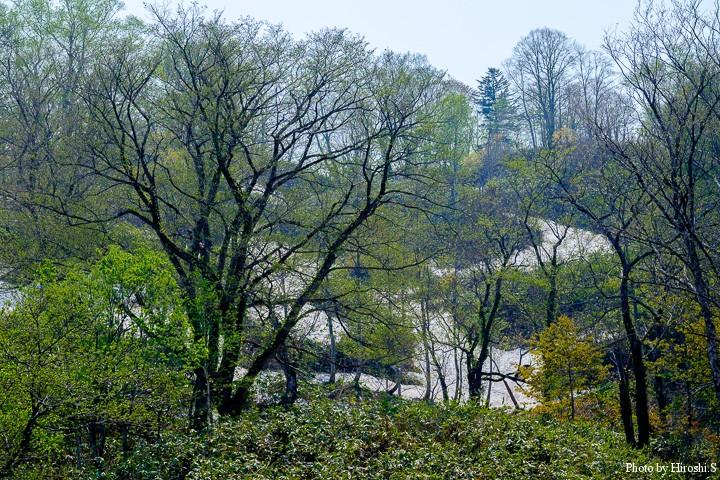 霧立峠の新緑と残雪