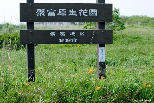 聚富(しっぷ)原生花園 札幌市内に近い場所でこうした場所があるのは、北海道ならではだと思う
