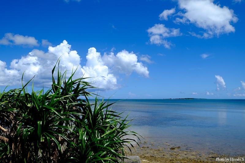 西表島 アダンと海 右手にみえる島は小浜島
