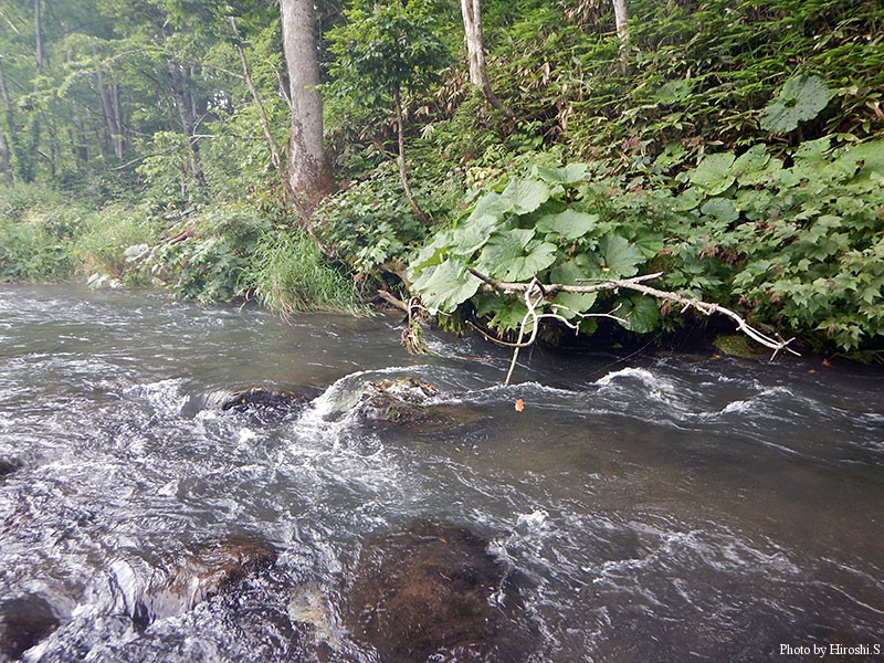 基本的に河原がなく、川通しの遡行を強いられた。