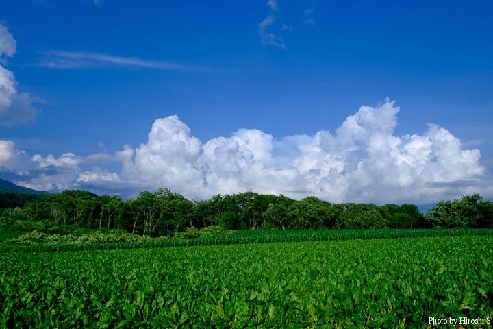 青空に、このような雲が出てくれば盛夏である。