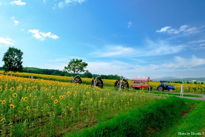 順路は半分に分かれていて、歩行者&自転車、もう一つが写真のトラクターで牽引している観光車の通路