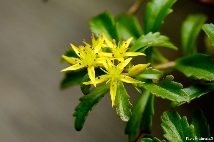 この種は不明 高山植物の棚に咲いていた