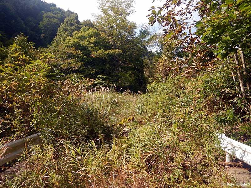 廃道と化した林道は自然に帰る