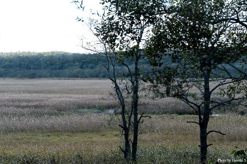 湧洞沼上流に広がる湿原
