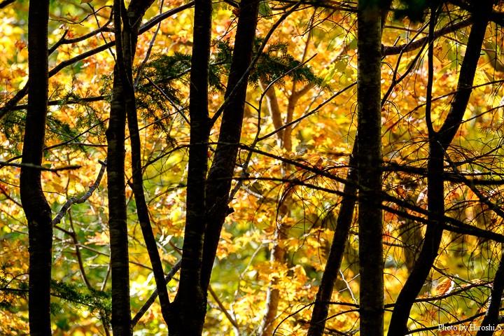 滝野の森でも紅葉は始まったばかりである。