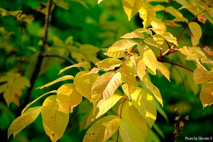黄紅葉も美しい