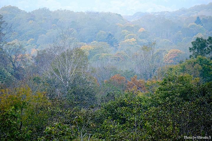 道南方面も山は紅葉の走りとなってきた。