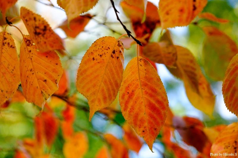 色づきは今ひとつの年だけど、それでも秋は美しく悲しくもある季節だ。