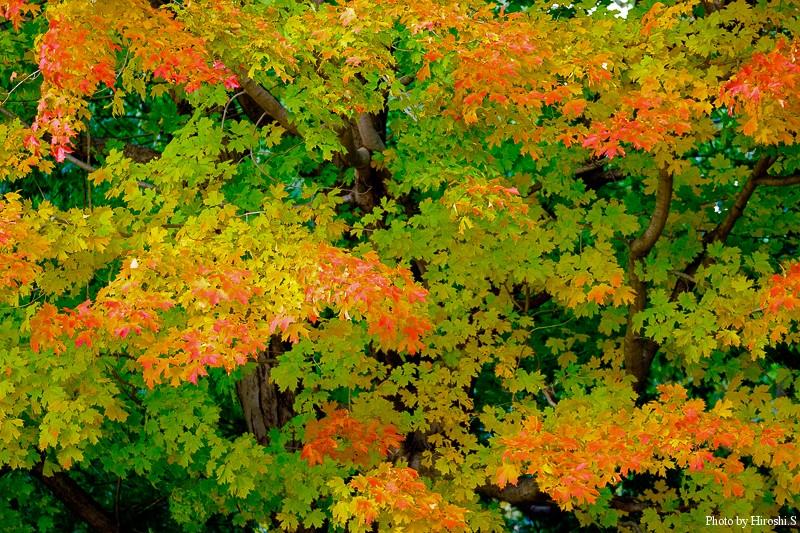 冒頭の紅葉をレンズを替えて撮影したもの。