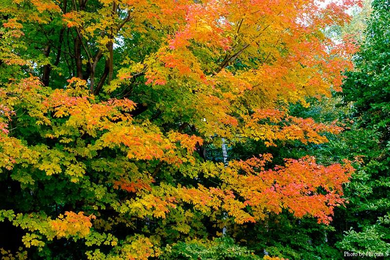 この木はバラ園の脇にどっしりと立っている