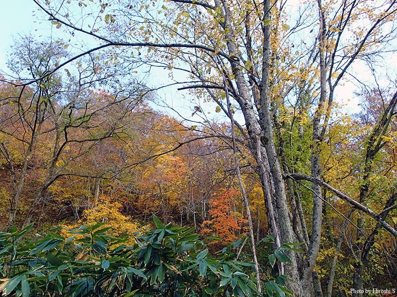 道南も平野で紅葉が終盤となってしまった。